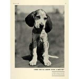 1937 Print Hunting Beagle Puppy Kirkwood Kennels Berwyn