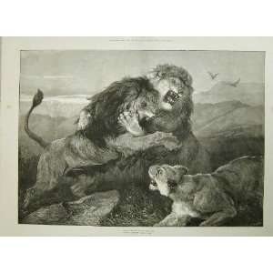 1873 Lions Fighting Animals Heywood Hardy Royal Academy