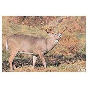 Tru Life Paper Targets   Deer Rut