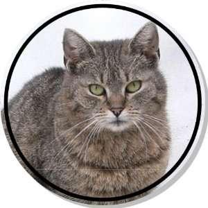 Cute Grey Tabby Cat Bumper Sticker Decal