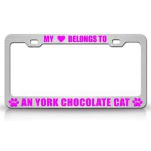 MY HEART BELONGS TO A YORK CHOCOLATE Cat Pet Auto License Plate Frame