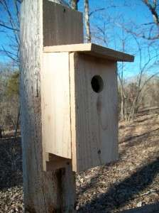 10 CEDAR BLUE BIRD WOOD BIRDHOUSE BIRD HOUSE FEATHERS